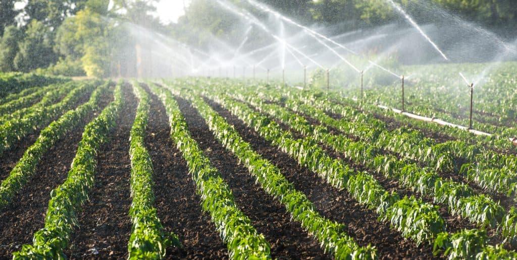 Smart irrigation (sensors)