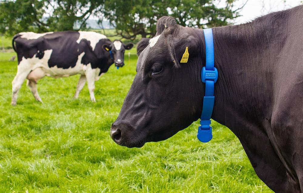 Livestock IoT monitoring